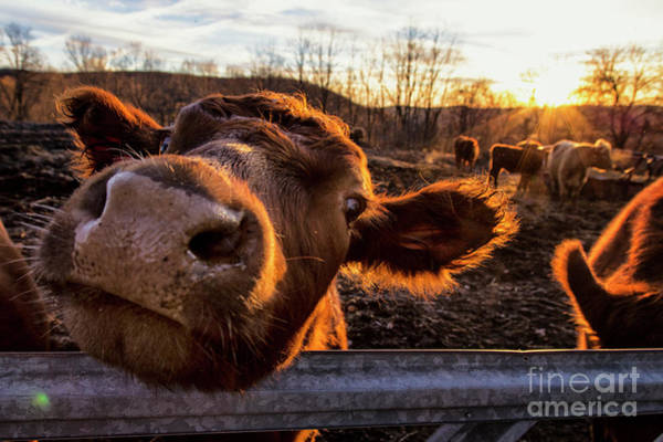 New Preston Ct Photograph - Greeting by Grant Dupill