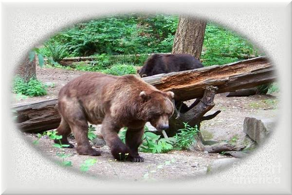 Photograph - Grizzly Bear by Charles Robinson