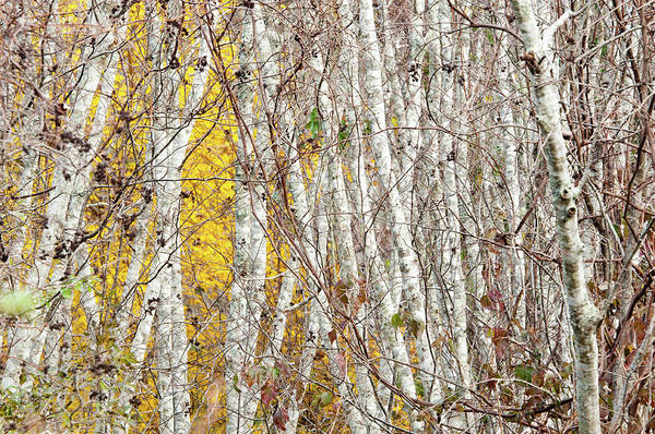 Photograph - Grove 2 by John Whitmarsh