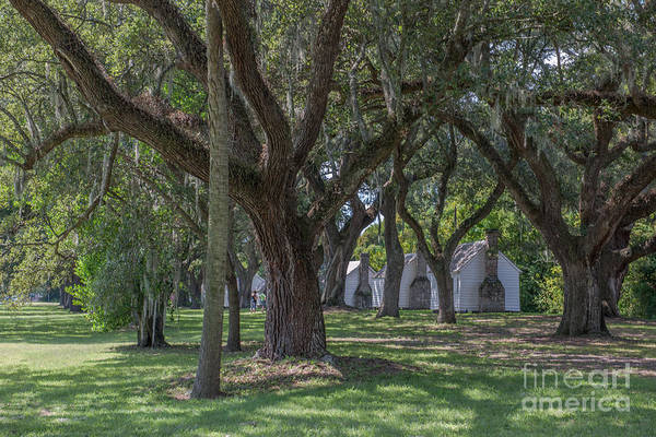 Photograph - Mcleod Gullah Heritage by Dale Powell