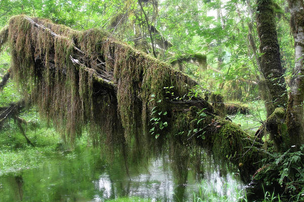 Photograph - Hall Of Mosses - Hoh Rain Forest Olympic National Park Wa Usa by Christine Till