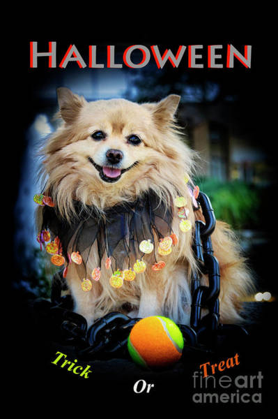 Dog Treat Photograph - Halloween Dog by Charline Xia