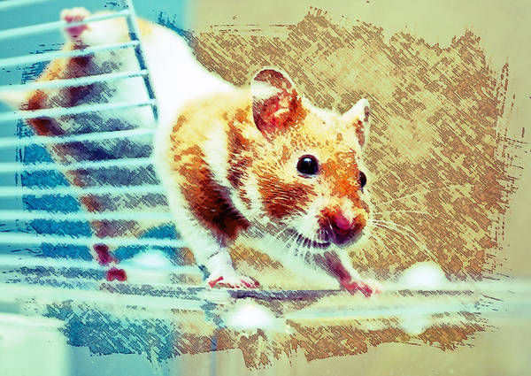 Hamster Photograph - Hamster by Tom Gowanlock