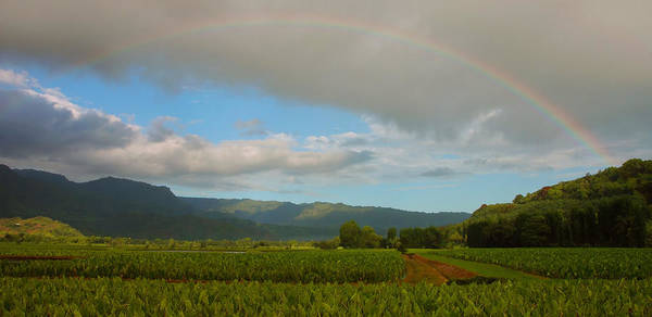 Wall Art - Photograph - Hanalei Valley Rainbow by Stephen  Vecchiotti