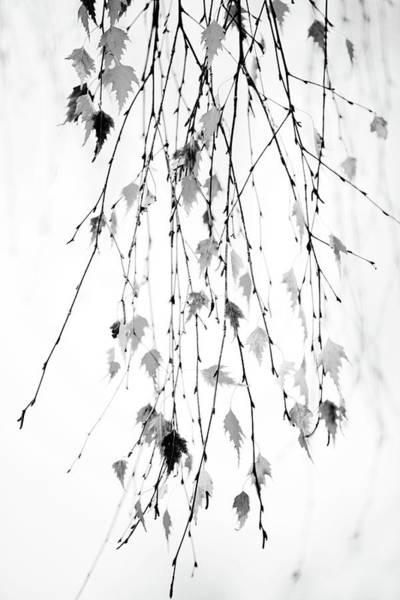 Wall Art - Photograph - Hanging by Rebecca Cozart