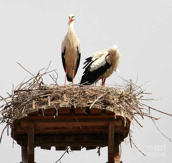 Water Birds Wall Art - Photograph - Happy Cuple Of Storks by Valia Bradshaw