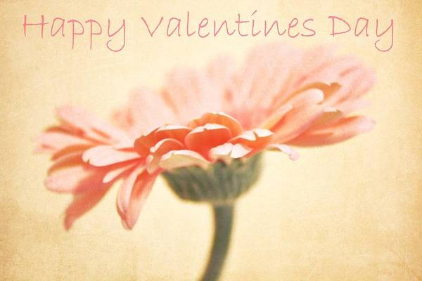 Valentines Photograph - Happy Valentines Day by Cathie Tyler