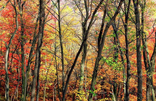 Photograph - Hardwood Forest by Anthony Dezenzio