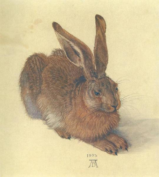Cabbage White Painting - Hare by Albrecht Durer