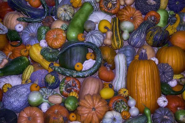 Gourd Photograph - Harvest Abundance  by Garry Gay