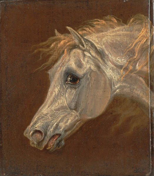 Ward Painting - Head Of A Grey Arabian Horse by Martin Theodore Ward