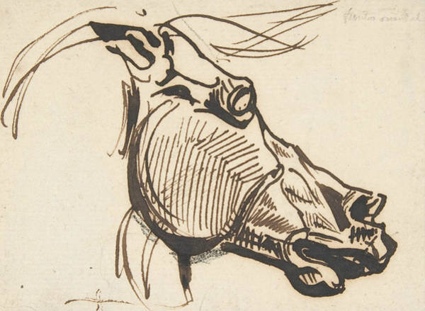 Drawing - Head Of A Horse, After The Parthenon by Eugene Delacroix