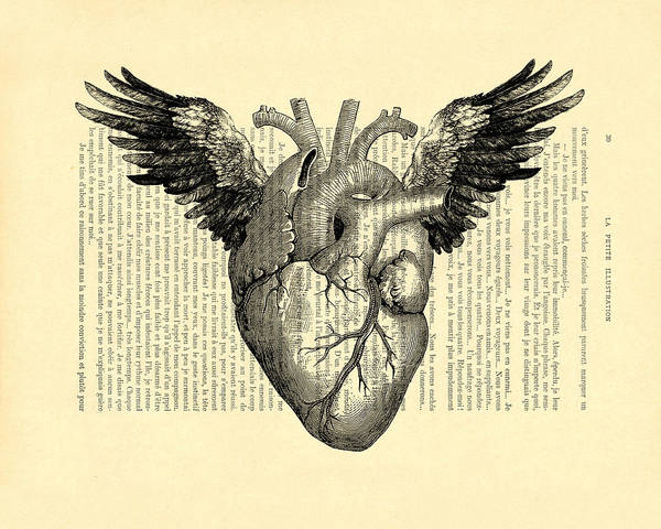 Anatomy Digital Art - Heart With Wings by Madame Memento