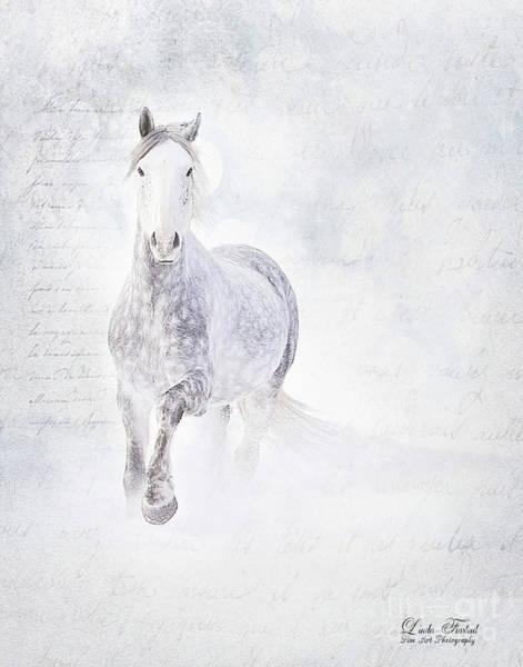 Andalusian Stallion Wall Art - Photograph - Spirit Of Charisma by Linda Finstad
