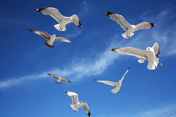 Photograph - Heavenly Seagulls by Sheila Kay McIntyre