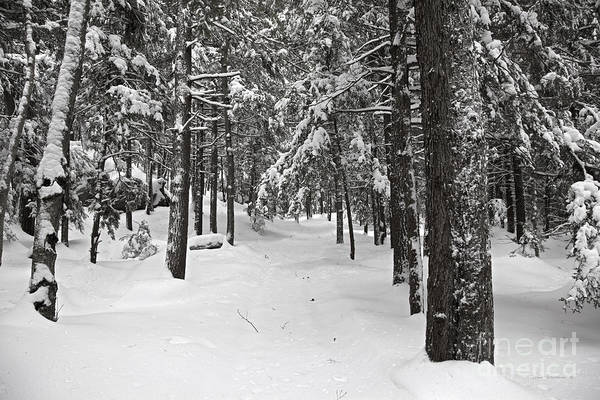 Wall Art - Photograph - Heavy With Snow by John Stephens
