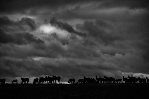Wall Art - Photograph - Herd #4 by Artur Baboev