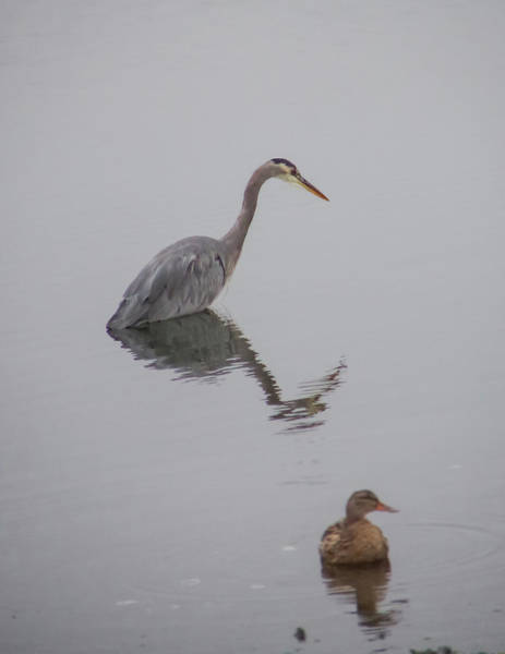 Photograph - Heron And Friend by Marilyn Wilson