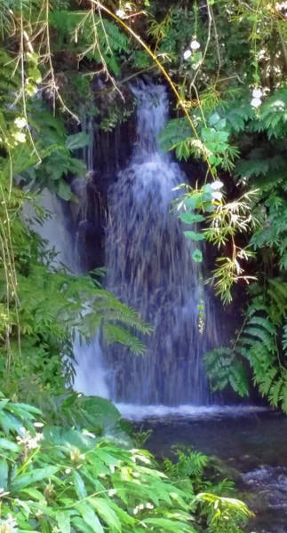 Photograph - Hidden Waterfall by Pamela Walton