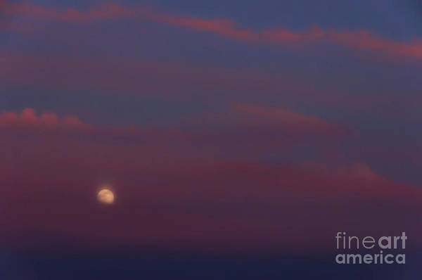 Photograph - Highland Stawberry Moon  by Thomas R Fletcher