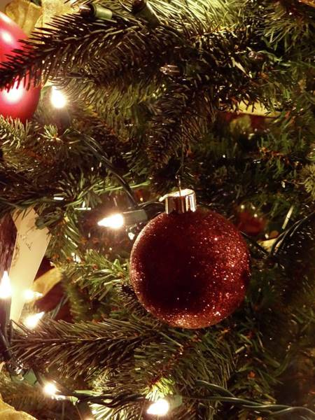 Photograph - Holiday Sparkle by Jenny Regan