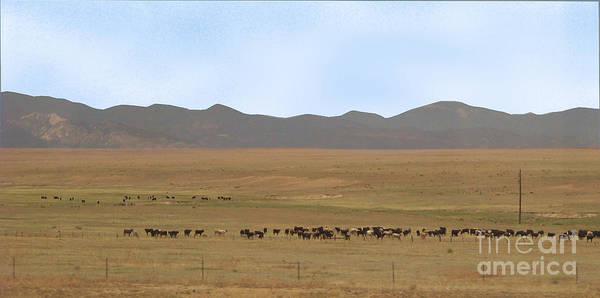 Photograph - Home On The Range by Charles Robinson