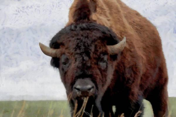 Colorado Wildlife Digital Art - Home On The Range by Ernie Echols