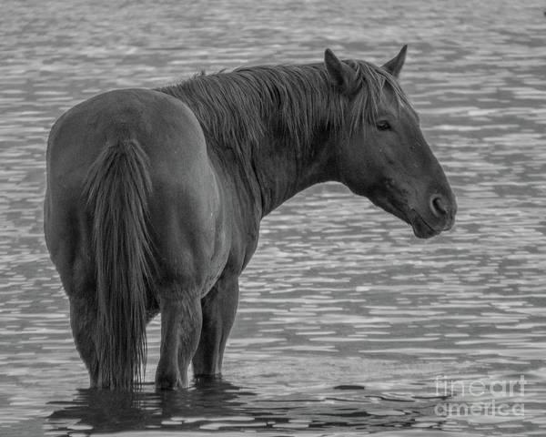 Horse 10 Art Print