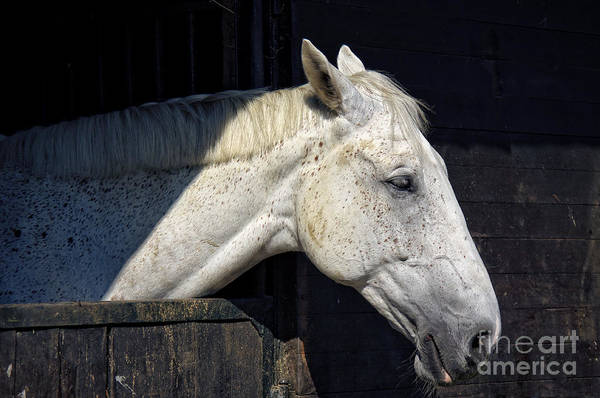 Photograph - Horse by Angela Doelling AD DESIGN Photo and PhotoArt