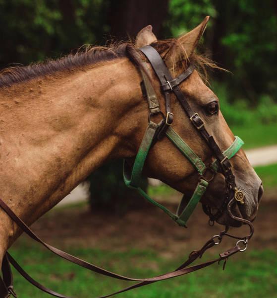 Heal Photograph - Horse by Hyuntae Kim