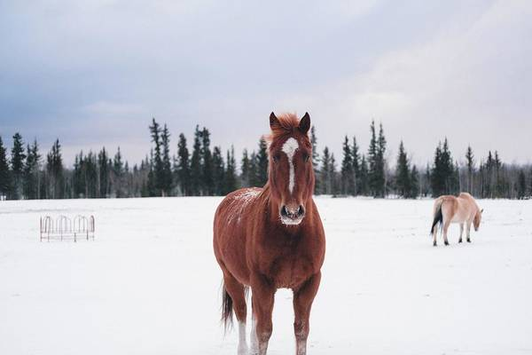 Color Digital Art - Horse by Maye Loeser