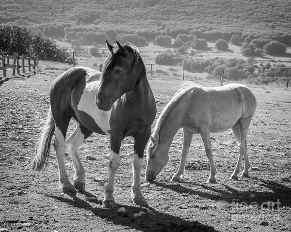 White Horse Photograph - Horses by Delphimages Photo Creations