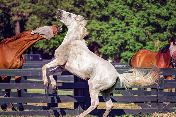 Photograph - Horses In Hilton Head Island by Peter Lakomy