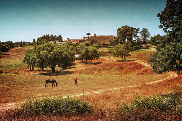 Wall Art - Photograph - Horses In Landscape by Carlos Caetano