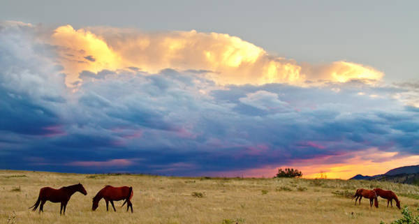 Photograph - Horses On The Storm Panorama by James BO Insogna