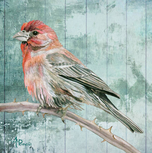 Painting - House Finch by Angeles M Pomata