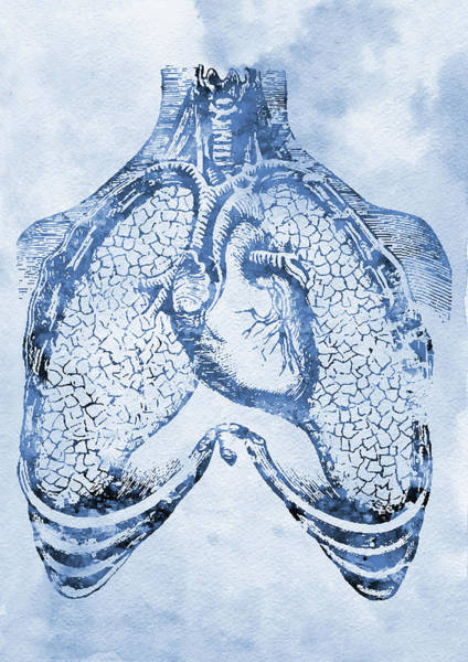 Lung Digital Art - Human Heart And Lungs X by Erzebet S