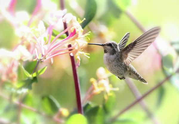 Wall Art - Photograph - Hummingbird And Spring Flowers  by Saija Lehtonen