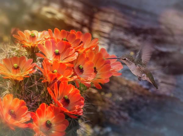 Wall Art - Photograph - Hummingbird And The Hedgehog  by Saija Lehtonen