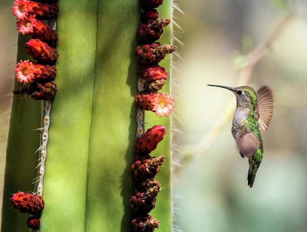 Wall Art - Photograph - Hummingbird Happiness  by Saija Lehtonen
