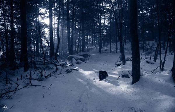 Photograph - I Dreamed I Was A Tracker  by Wayne King