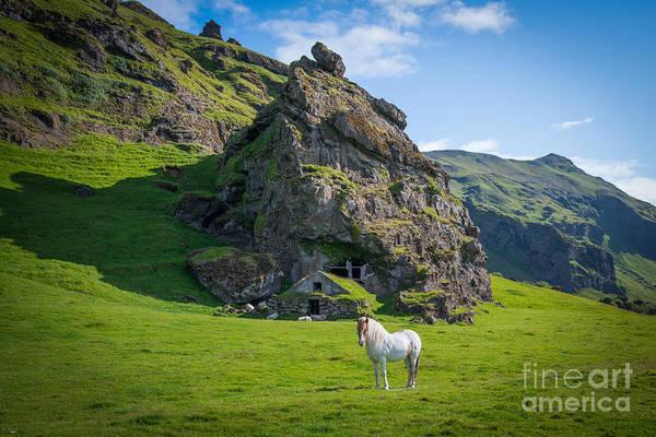 Sheep Rock Wall Art - Photograph - Icelandic Horse by Michael Ver Sprill