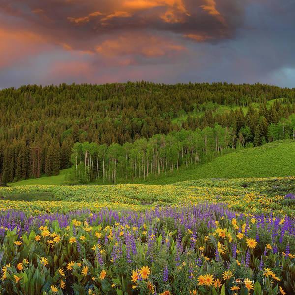 Wall Art - Photograph - Idaho Spring by Leland D Howard