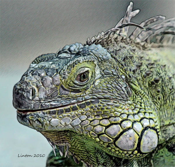 Iguana Digital Art - Iguana Verde by Larry Linton