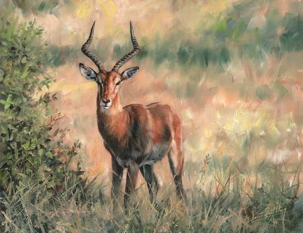 Savannah Painting - Impala by David Stribbling