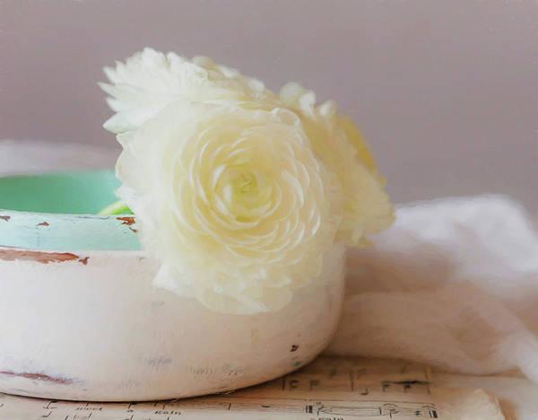Rose Bowl Photograph - In A White Bowl by Kim Hojnacki