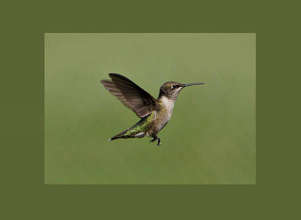 Photograph - In Flight by Sandy Keeton