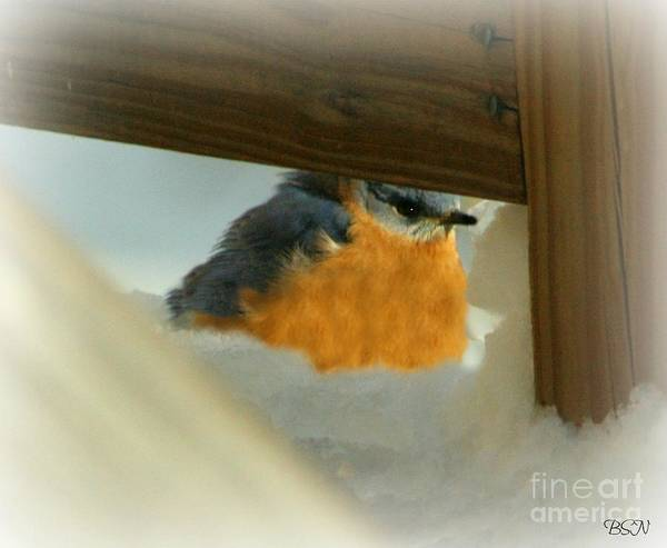 Photograph - In Hiding by Barbara S Nickerson