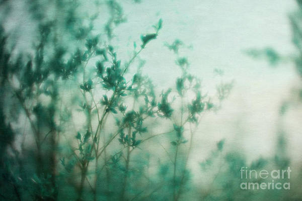 Wall Art - Photograph - In The Deep Forest 5 by Priska Wettstein