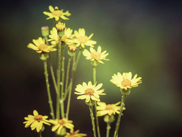 Photograph - In The Garden by Van Sutherland
